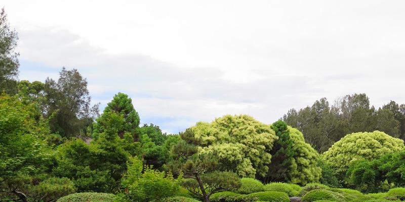 Perennial African Daisies