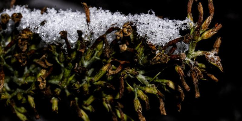 What Types of Ferns Prefer Acidic Soil?